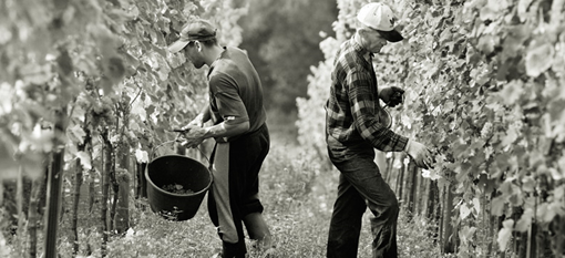 Celebrate the harvest in Franschhoek photo