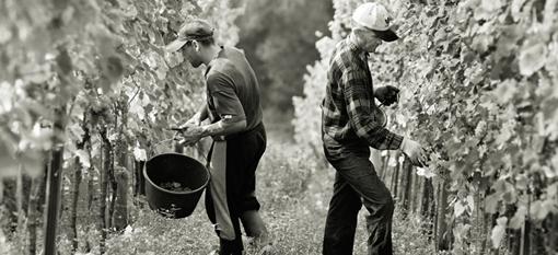 Celebrate the harvest in Franschhoek photo