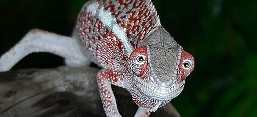 The Jordan Chameleon Bursary photo