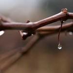 Watery wine photo