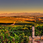 The World`s Next Big Wine Regions photo