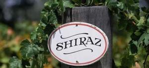 shiraz 300x137 shiraz