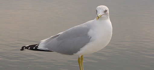 Seagull Wine photo