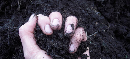 Natural fungicides use in organic farming cause soil toxicity photo
