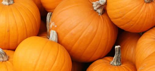 350kg pumpkin wows SA photo