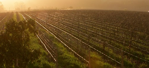Innovative Bio-Dynamic and Organic Trial with Haskell Pillars Vineyard photo