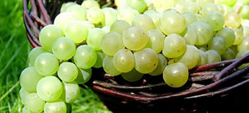 Semillons to shout about photo