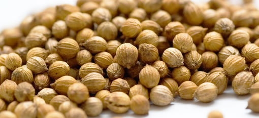Coriander seed oil found to kill bacteria photo