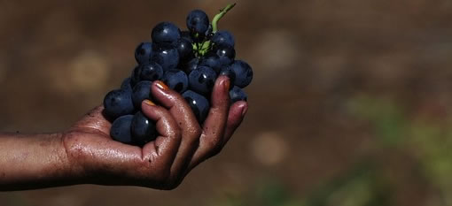 Human Rights Watch Author Defends Report on South African Wine photo