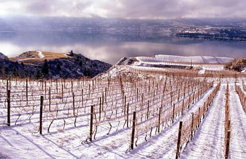It`s time for celebrating ice wine photo