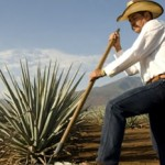 The Hard Sell Of Mexican Tequila Makers photo