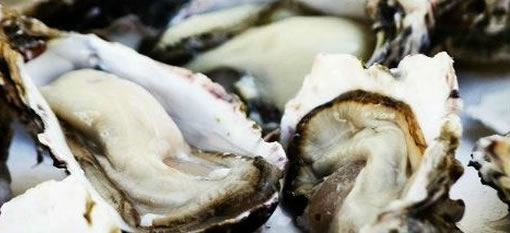 The best oysters in South Africa photo