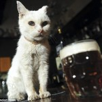 Meet Britain's Oldest Pub Cat photo