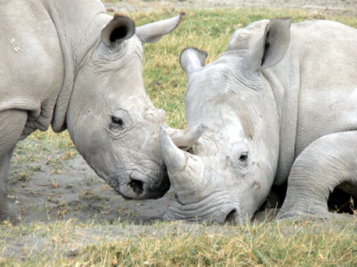Spur raises R90 000 for Rhino Conservation in a week photo