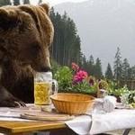 Bears drink 100 cans of beer after Norwegian cabin break-in photo