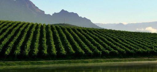 The Jaw-Dropping Wines of South Africa`s Stellenbosch District photo
