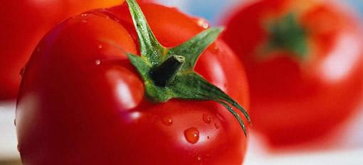 Turning tomatoes into wine photo
