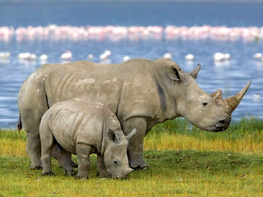 Join Durbanville Hills Wines For Race in Aid of Rhino's in Magaliesberg photo