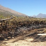 A violent political protest outside De Doorns leaves vineyards in flames photo