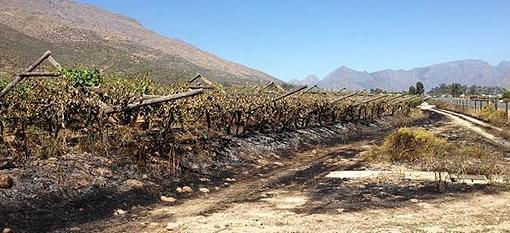 A violent political protest outside De Doorns leaves vineyards in flames photo