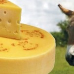 The Most Expensive Cheese, Made With Donkey Milk photo