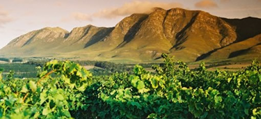 The change in South African wine photo