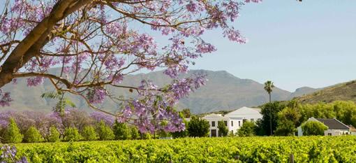De Wetshof Vineyards in Fine Form Before a Happy Landing photo