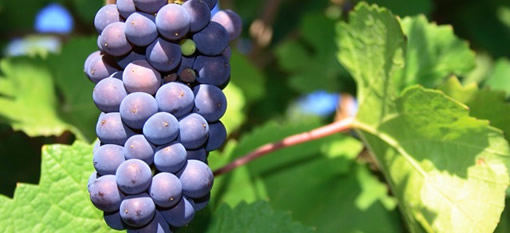 The Pinot Noir Challenge – Germany Vs The World photo