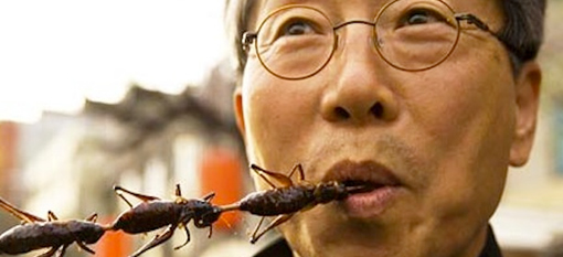 Insects may be the most sustainable food source photo