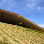 Winery turns rooftop into a vineyard photo