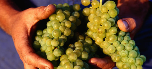 The 5 Hottest Male Chardonnay Makers in South Africa photo