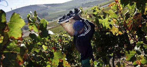 3 Fun Facts about South African Cabernet Sauvignon photo