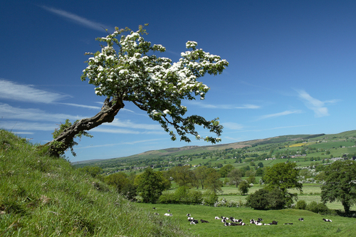 Why the Ribble Valley is a wine tourist`s dream photo