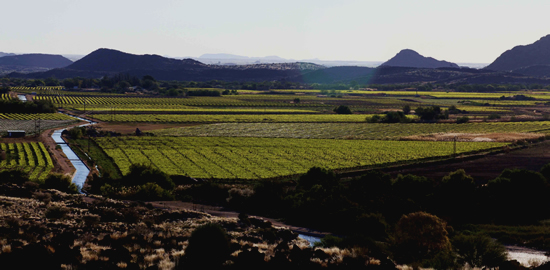 Fierce Heat Abates in Time for Harvest at Orange River Cellars photo