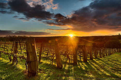 Winchester wine enthusiasts enjoy successful August photo