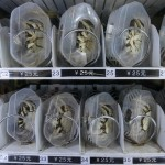 Live Crab Vending Machine Offers Fresh Shellfish On The Go photo