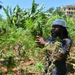 Jamaica`s twist on wine tours for pot lovers photo
