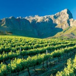Unusual Wine Tasting Experiences in South Africa photo