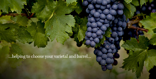Make your own wine with the world's best winemakers photo