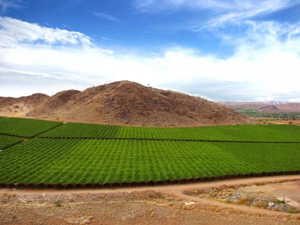Orange River vineyards. e1496311579896 Orange River Cellars Continues Domination of SA Muscadel Competition