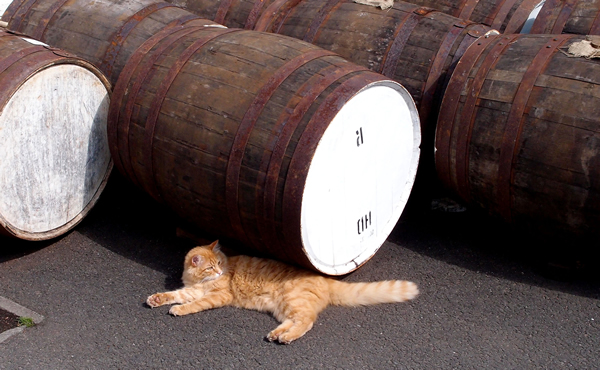 The Secret Lives of Distillery Cats photo