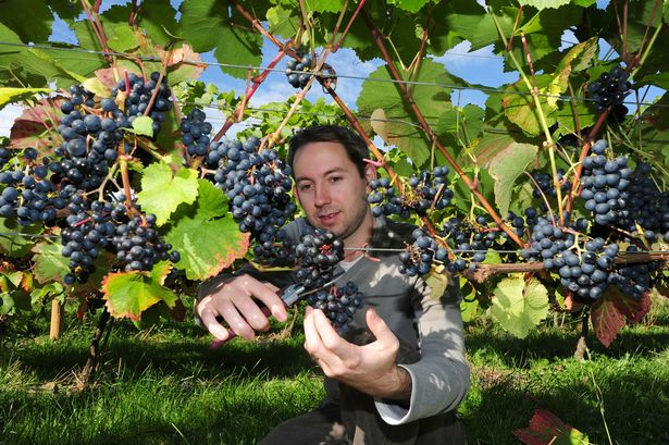 Global warming could see North East become major wine producing region photo
