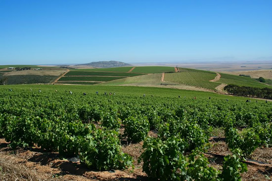 Fairview and Spice Route: Discovering the Wines of South Africa photo
