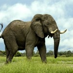 SPCA against elephants on wine estate photo