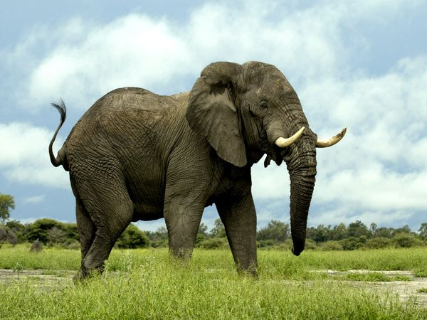 SPCA against elephants on wine estate photo