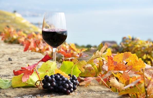 Ultra Wine Picks for Autumn photo