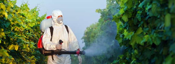 Winery Found Guilty of Pesticide Poisoning photo