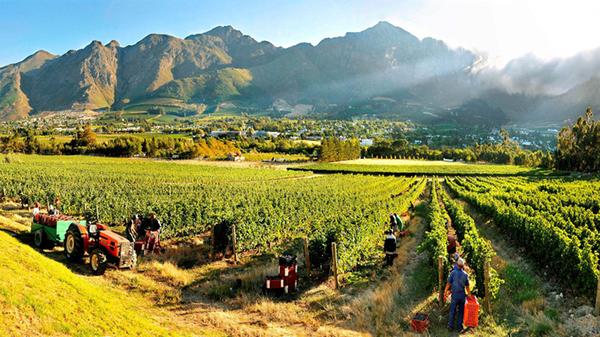 TripAdvisor Travellers Love Franschhoek! photo