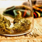 Will America`s Pot Capital Choose Wine Over Weed? photo