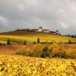 Jackson Family Wines launches new Burgundy wine division photo